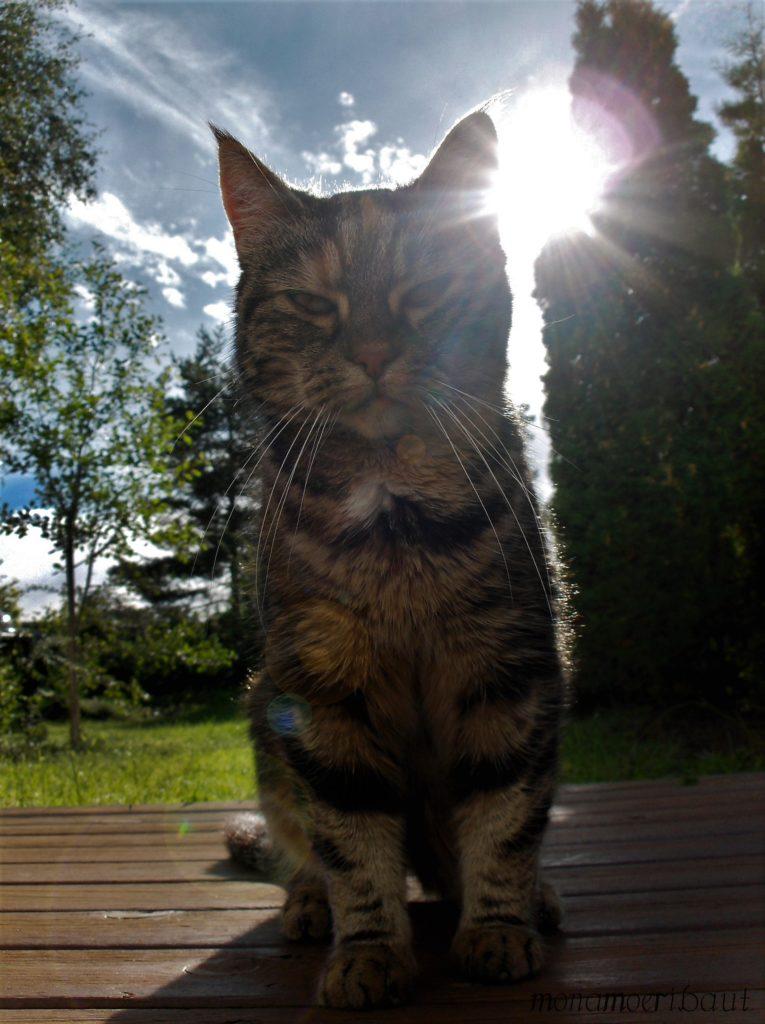 Katt portrett